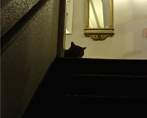 Allan's photo: Sometimes she waits right by the stairs to collect pets.