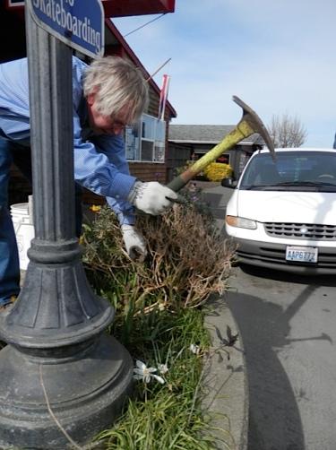 Allan hoiks out the errant plant.