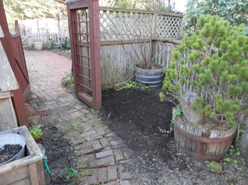 weeded and mulched by the gate to the middle courtyard