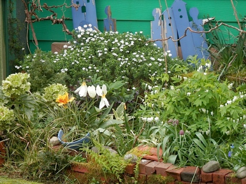 over the fence with white bleeding heart and perennial candytuft