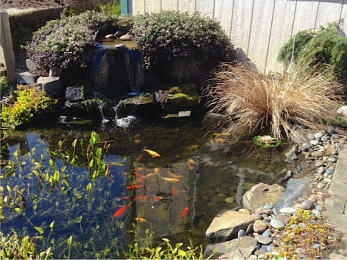 Peninsula Landscape Supply pond