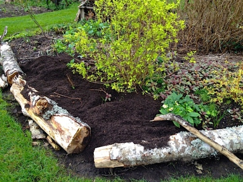 filling in an edge by the bogsy wood