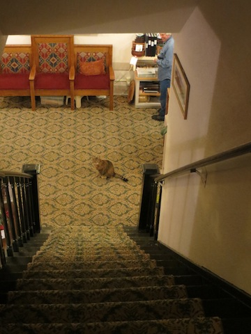 From the second floor, I look down at Shelly the hotel cat.