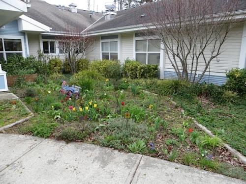 """Mom's garden"", the NE quadrant, before"