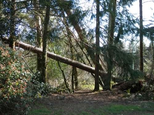 more tree fall by the driveway