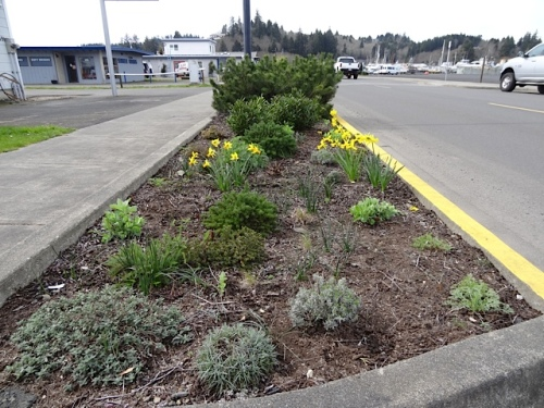 my favourite little bed on Howerton, by the Ilwaco Pavilion