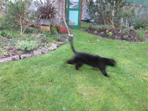 Neighbour cat Onyx visited and ran all around.
