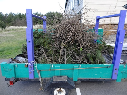a trailer load of prunings