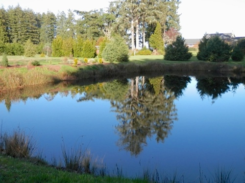 The irrigation pond for the old Clarke Nursery, which used to be on this and the neighbouring property.