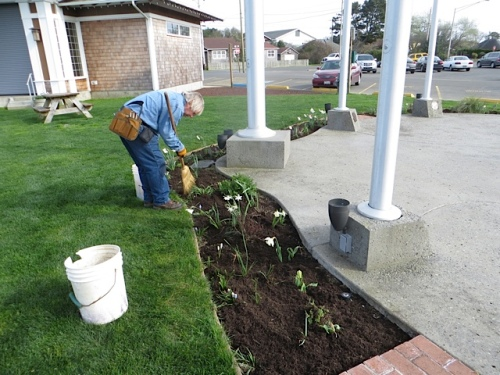 Allan uses a broom to sweep dirt off leaves and level the mulch.