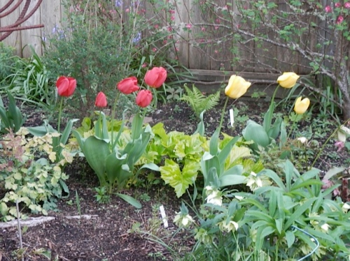 tulips and gold acanthus