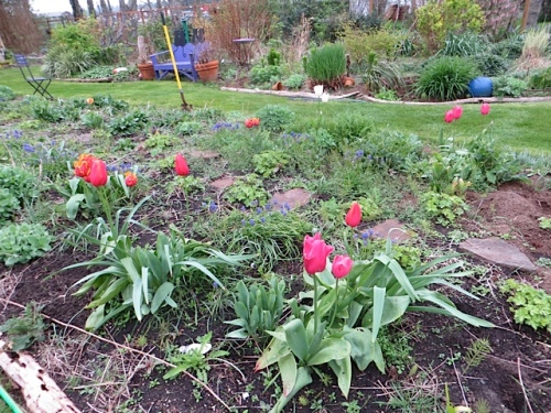 center bed with lovely returning tulips and enormous shotweeds