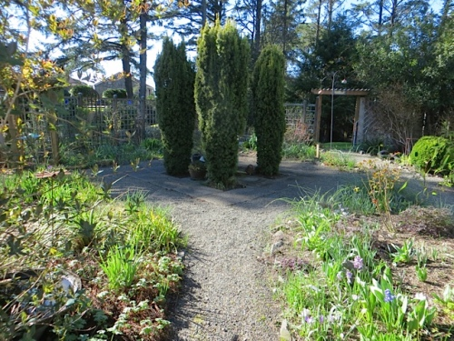 Here's the weekly view into the fenced garden.  Not visiting weekly yet but soon will be.