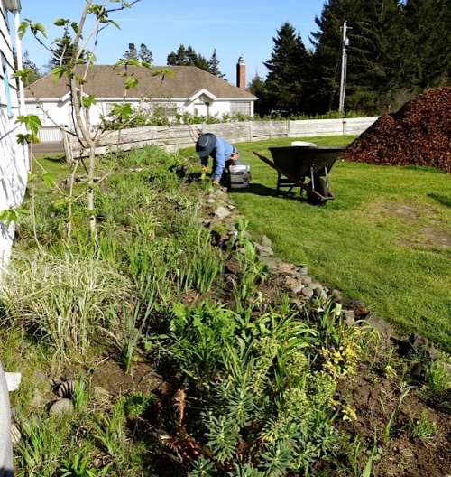 weeding the garden shed garden