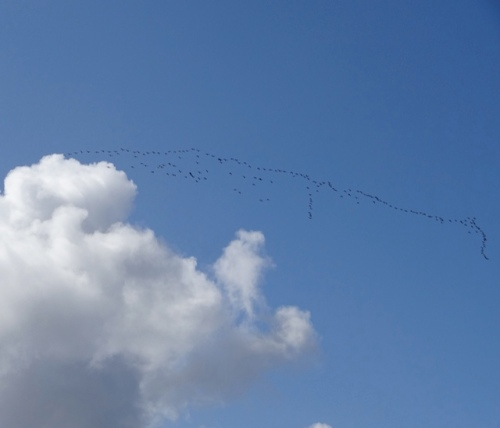 a flock of noisy birds flew overhead
