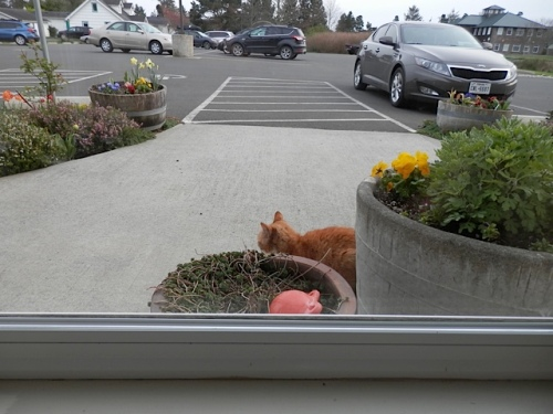 Parking Lot Cat waits to greet customers.