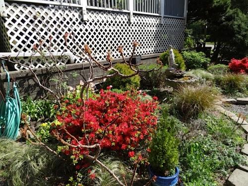 the garden below the house deck