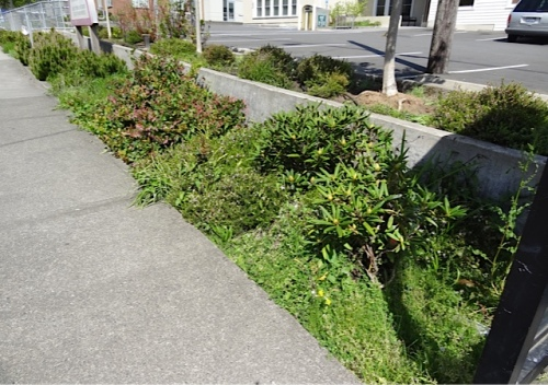 strip along the sidewalk, before