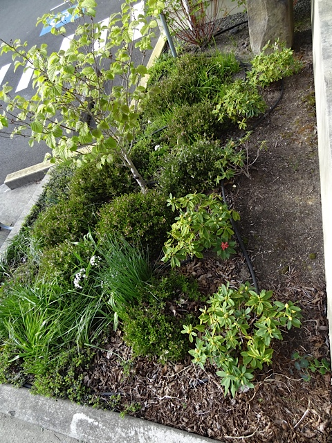 The entrance garden: the outside was fine, as if someone has already weeded it.