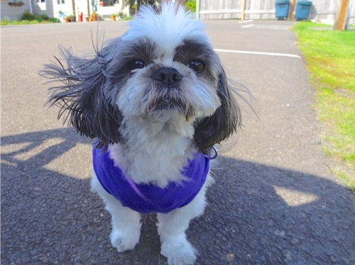 Our friend Mitzu the Shih Tzu was there!  (Allan's photo)