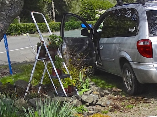 The plants that had been left behind had been placed on this ladder.  (Allan's photo)