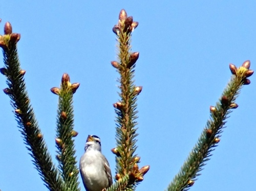 Allan's photo:  This little bird regaled us with song while we picked up little plastic bits.