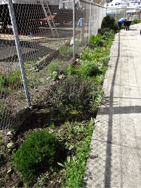 Allan's photo: weeded (foreground) and unweeded
