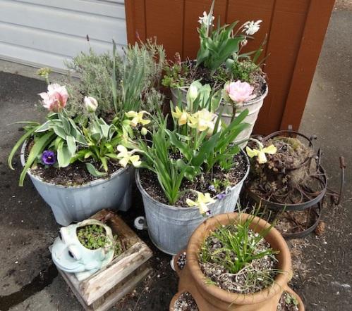 back porch planters, deadheaded