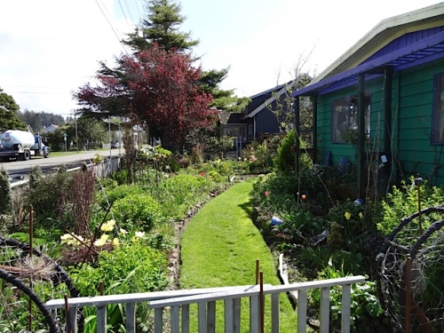 looking east at the front garden which I so hope to weed soon.