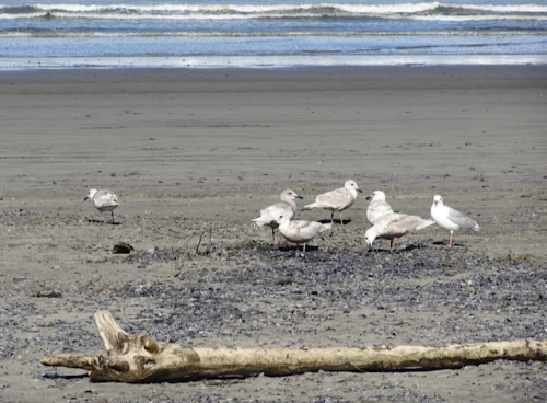 The gulls seemed to find them quite tasty.
