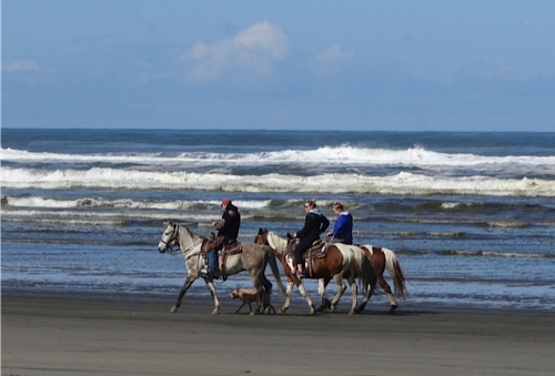 Horse riders are a common sight on our beach.