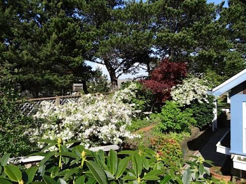 Jo's garden from her deck