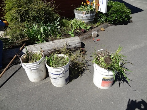 during the project with three buckets of plants removed