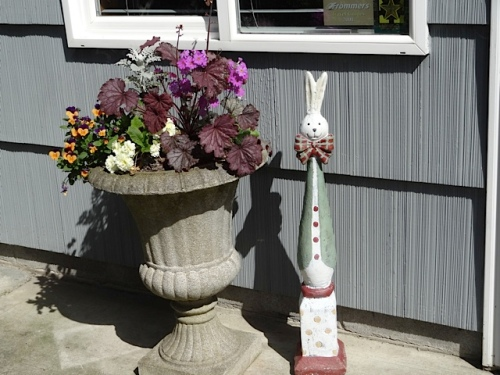 a container planting by Mary by the office door (Allan's photo)