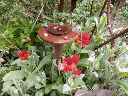 Tulip 'Leo', a favourite, had returned!