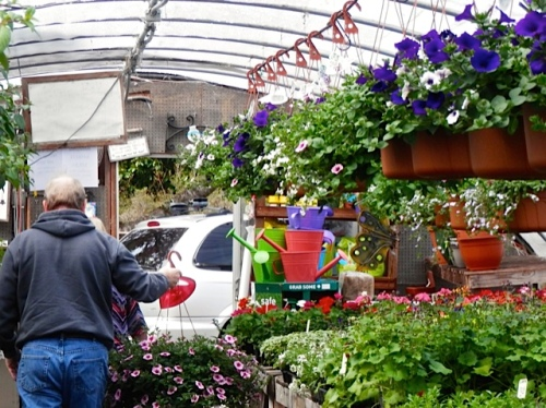 hanging basket being purchased