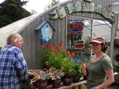 Shelly of Flowering Hedges stopped by and we had a quick natter about the joys of gardening for a living.