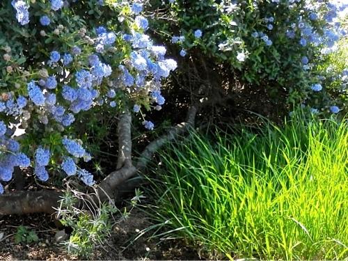 with ornamental grass (Allan's photo)