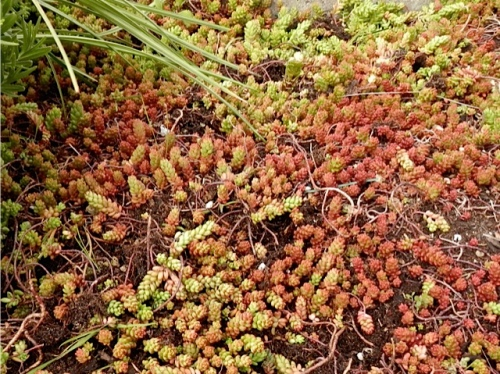 Sedums are good here as these get very little water.