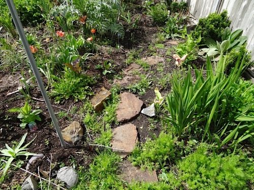 weedy path to the water meter