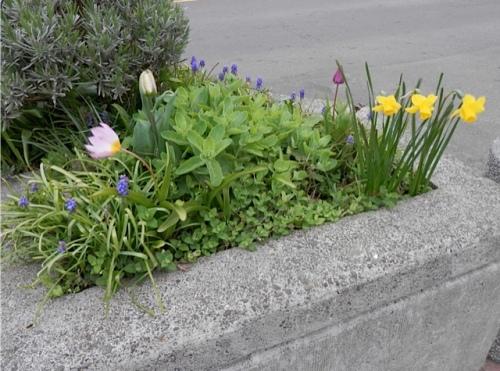 Long Beach planter vignette