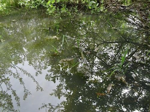 the seasonal pond