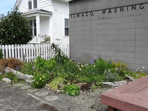 Ilwaco post office garden