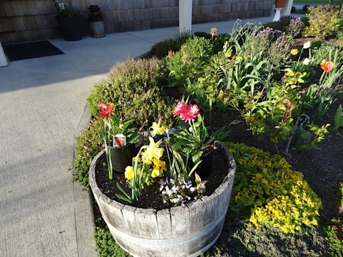 Owner Sondra has been too busy to get these plants out of their pots and into the barrel.