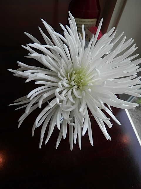 again the table with the white chrysanthemum