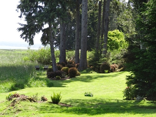 The lawn flows to the north right into Steve and John's bayside lawn and huckleberry grove.