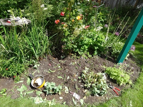 after.  Weedy sedge dug out.  Check!