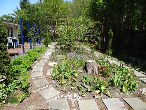 A circle of Alliums is about to bloom around that tree stump.