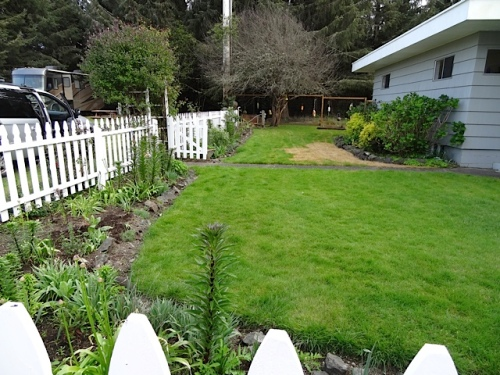 I took my weekly photo of the picket fence garden.