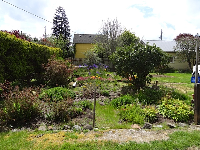 looking at the south garden, before